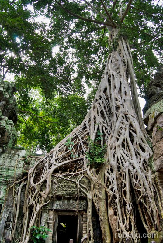 TaProhm, Angkor