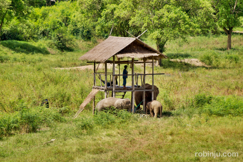 elefantes chiang rai