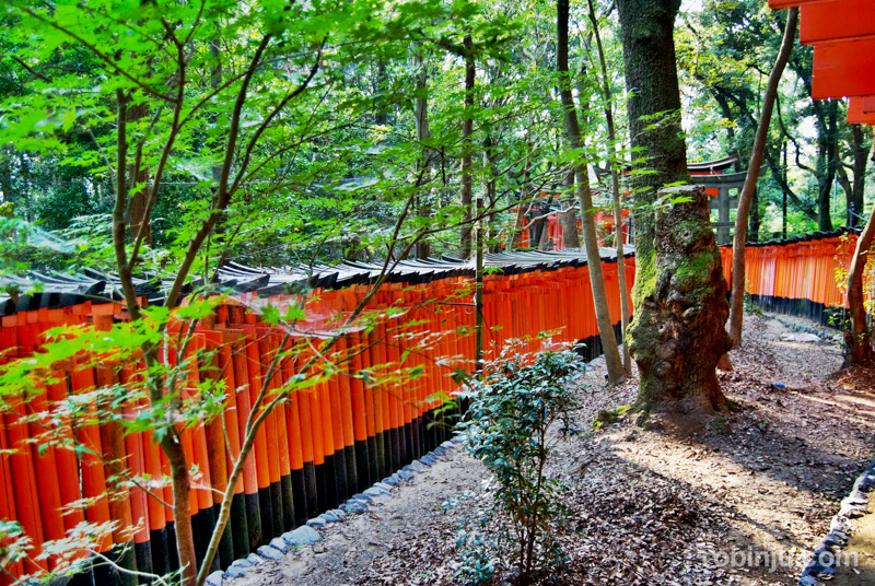 Fushimi Inari-012