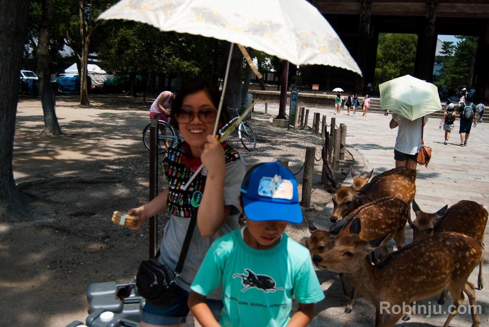 Ciervos Nara