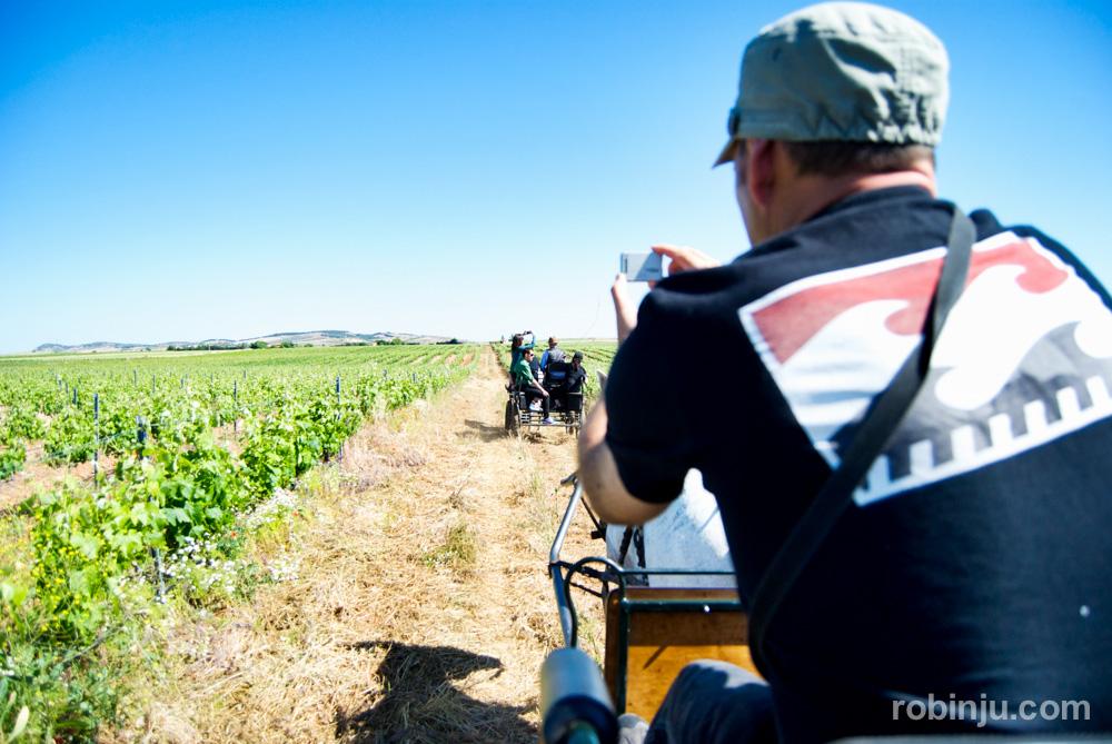 Un paseo a caballo por los viñedos de la ribera del guadiana
