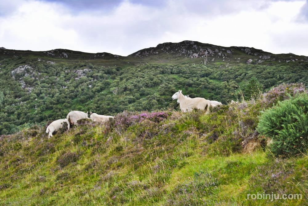 En coche por las Highlands escocesas.