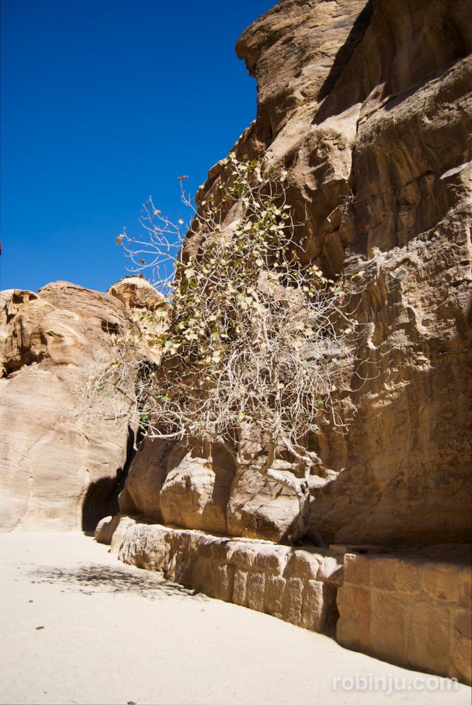 El desfiladero de Petra