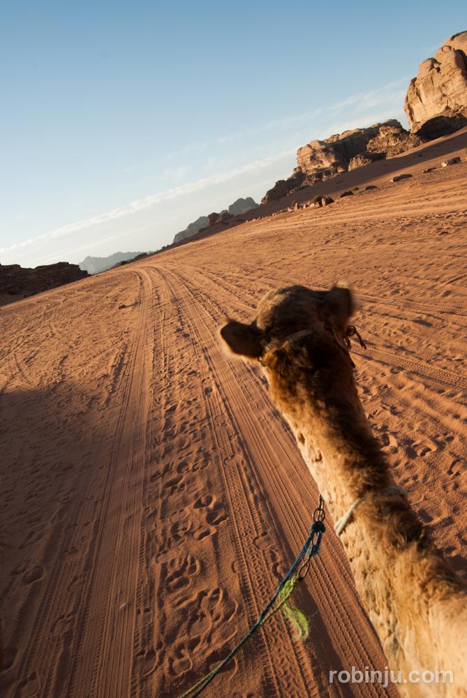 Atardecer en Wadi Rum y nuestros amigos dromedarios