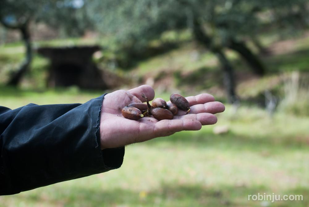 """Descubriendo la ruta del Jamón Ibérico """"Dehesa de Extremadura"""""""