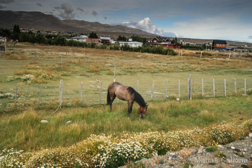 Calafate (Patagonia)