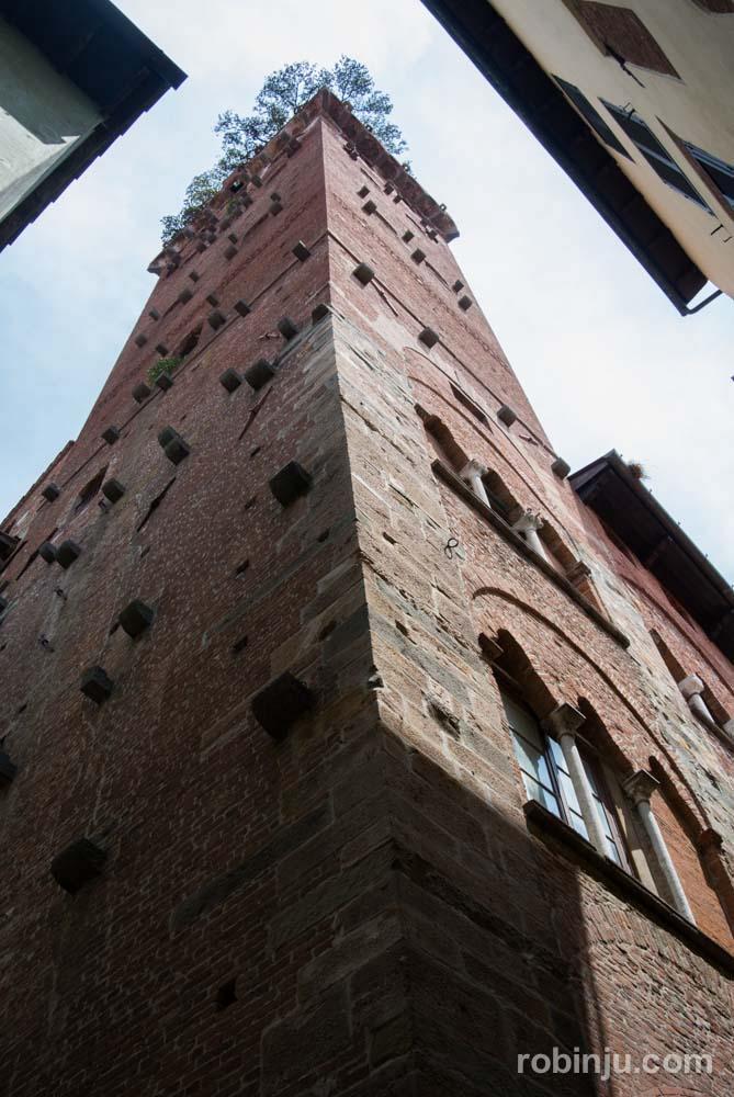 La Torre Guinigi de Lucca - Toscana- Italia-1