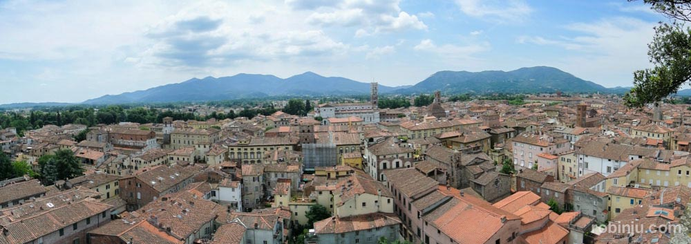 La Torre Guinigi de Lucca - Toscana- Italia-13
