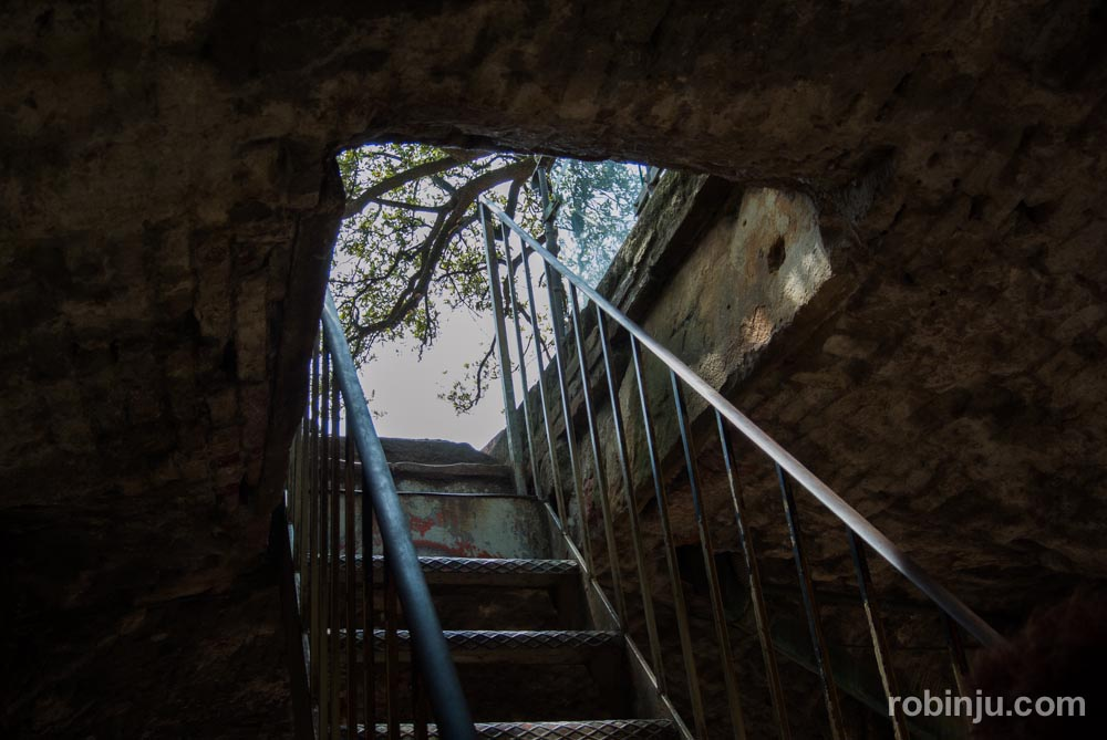 La Torre Guinigi de Lucca - Toscana- Italia-37