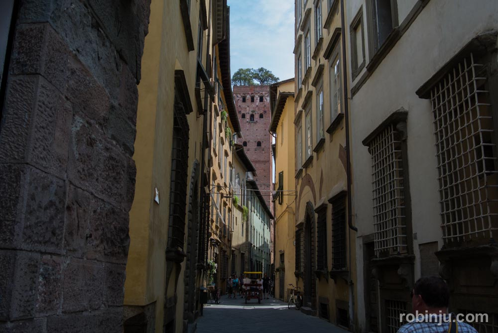 La Torre Guinigi de Lucca - Toscana- Italia-40